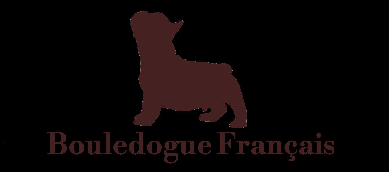 Elevage Bouledogue Francais Eleveur Des Contes De Mirabeau Var 83 Paca 06 13